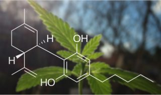 everything-you-need-to-know-about-cbd