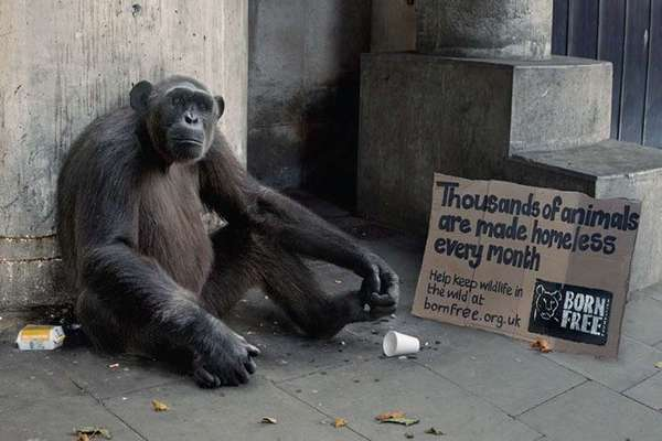 homeless-animals-ad-campaign