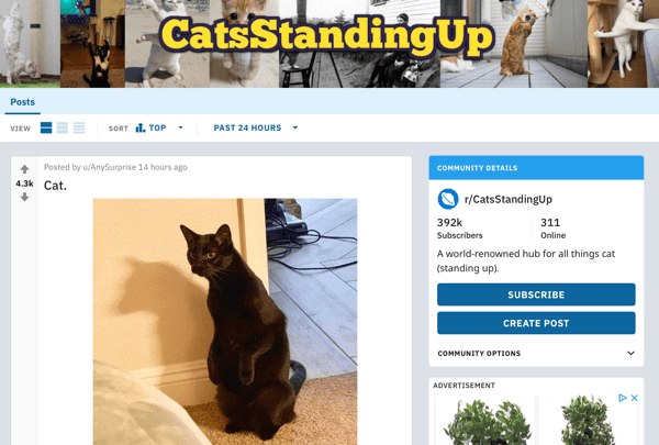 how-to-market-reddit-guide-businesses-cats