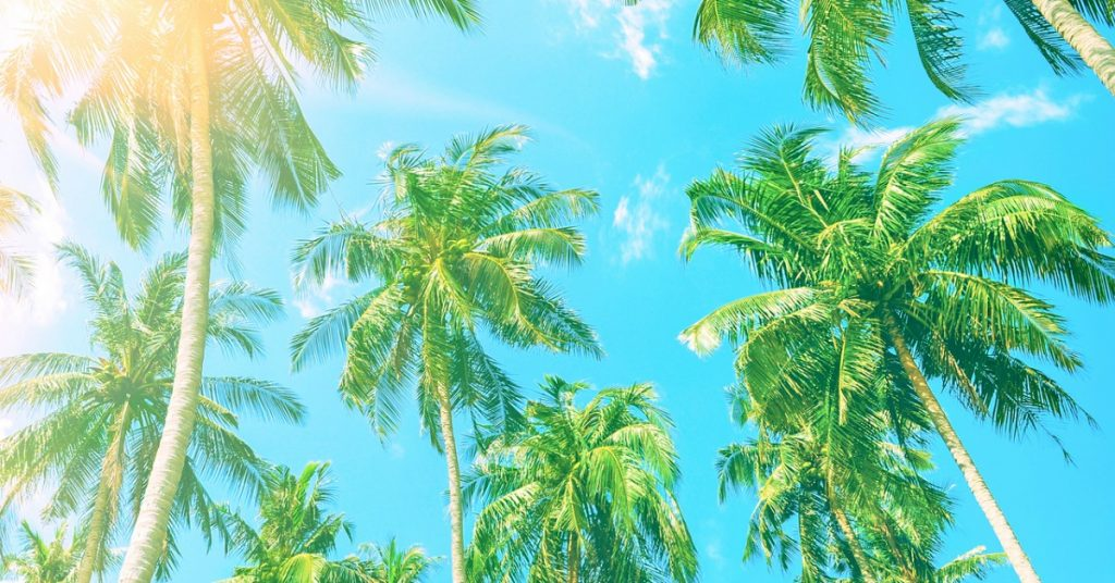Beautiful beach. View of nice tropical beach with palms around. Holiday and vacation concept. Tropical beach.