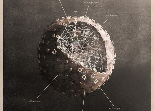 science-art-nucleus