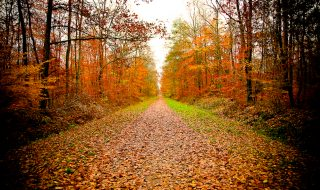 sources-of-inspiration-for-web-designers-fall-autumn-tree-forest-road