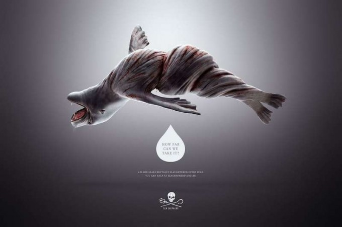 wringed-ocean-seal-conservation-campaign