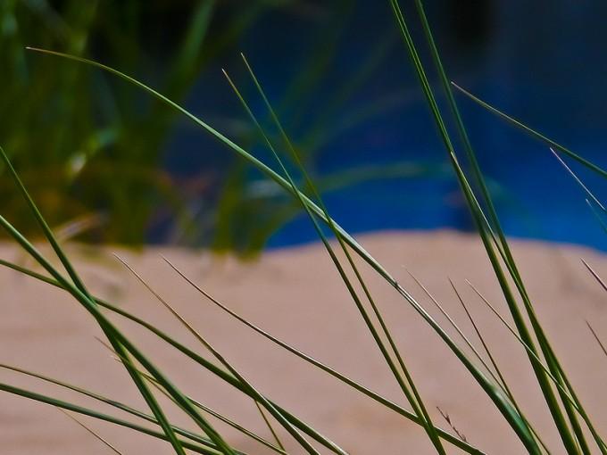 1 - Michigan City Dune Grass by Steve A Johnson