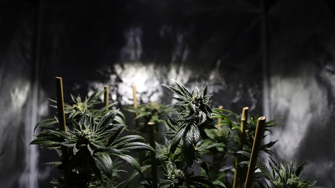 The Truth About Marijuana 7