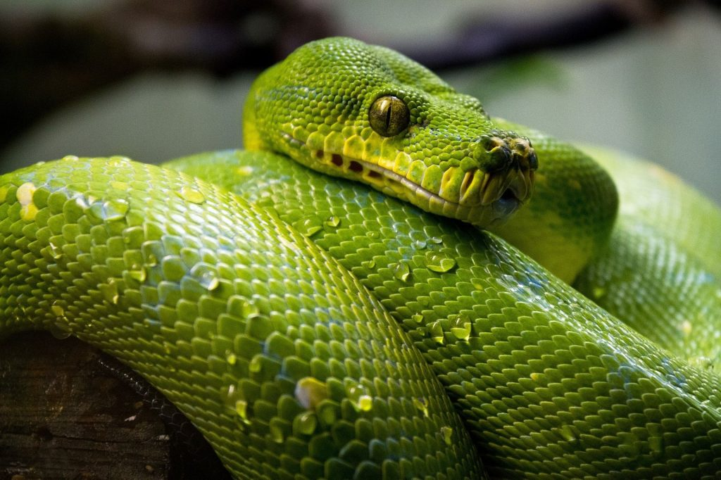 automated-software-testing-with-python-complete-guide-snake