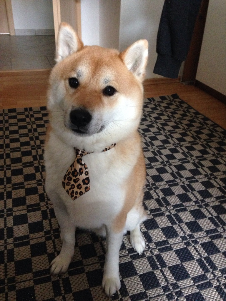 business-doge-meme