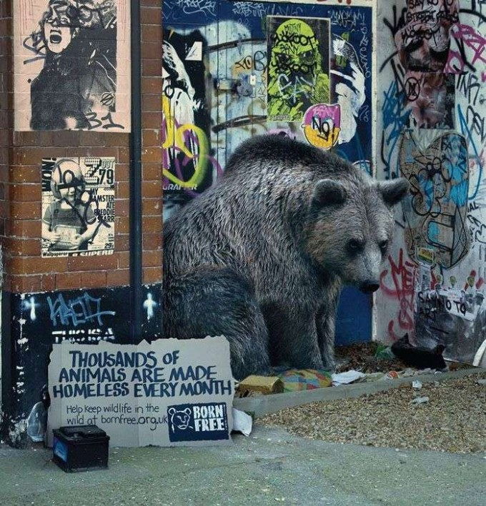 homeless-bear-conservation-wildlife-campaign-tips