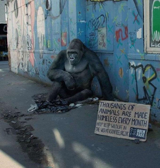homeless-gorilla-ad-campaign