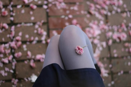 rose leg